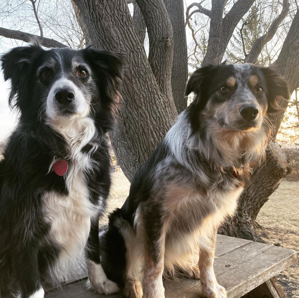 Sassy (with Foxy)